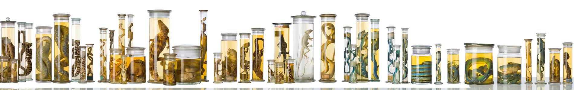Tierpräparate aus der Nass-Sammlung des Berliner Naturkundemuseums