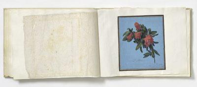 Johann Baese, L'italia (Oleander), um 1830, Museum August Kestner; © Museen für Kulturgeschichte Hannover, Museum August Kestner