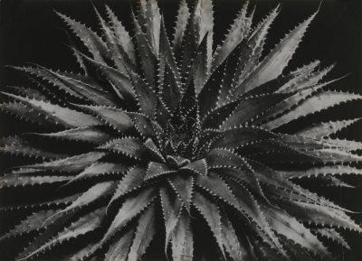 Aenne Biermann, ohne Titel, ca. 1929, 17,0 x 23,7 cm, Museum für Angewandte Kunst Gera; © Museum für Angewandte Kunst Gera