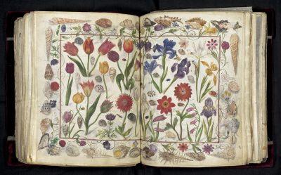 Doppelseitige Darstellung von Blumen, Muscheln und Insekten, innerhalb eines Muschelrandes, um 1590/1595; © HAB Wolfenbüttel